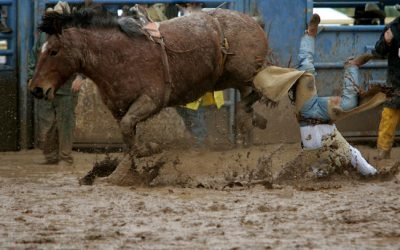 Sticking Close to the Bucking Horse